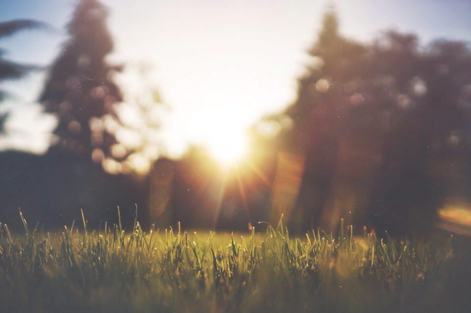 Pielęgnacja trawnika na wiosnę – o czym należy pamiętać?